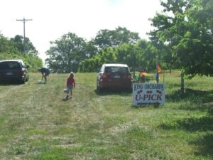 u-pick cherry orchard in northern Michigan near Traverse City