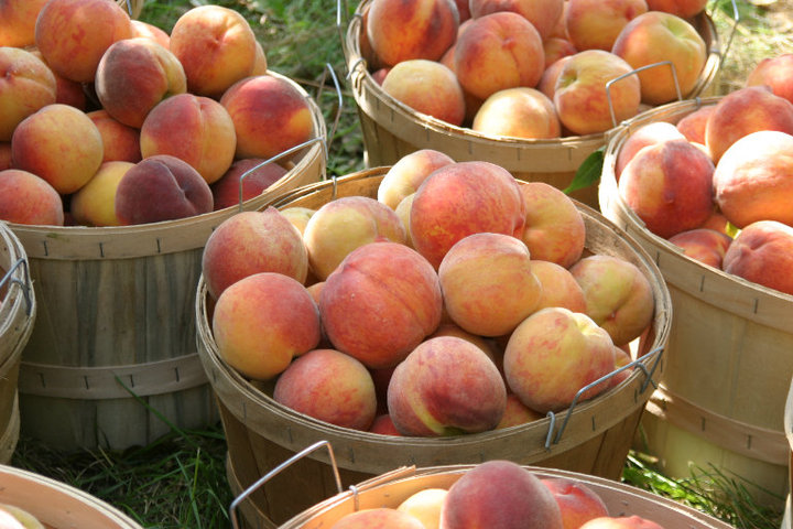 Michigan Peaches Nectarines King Orchards