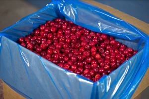 40-LBS of iqf tart cherries