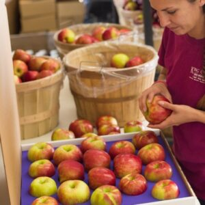 Packing Michigan Apples for safe Shipping