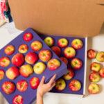fresh apple Shipping box