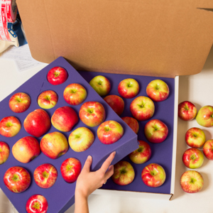 fresh apple Shipping box